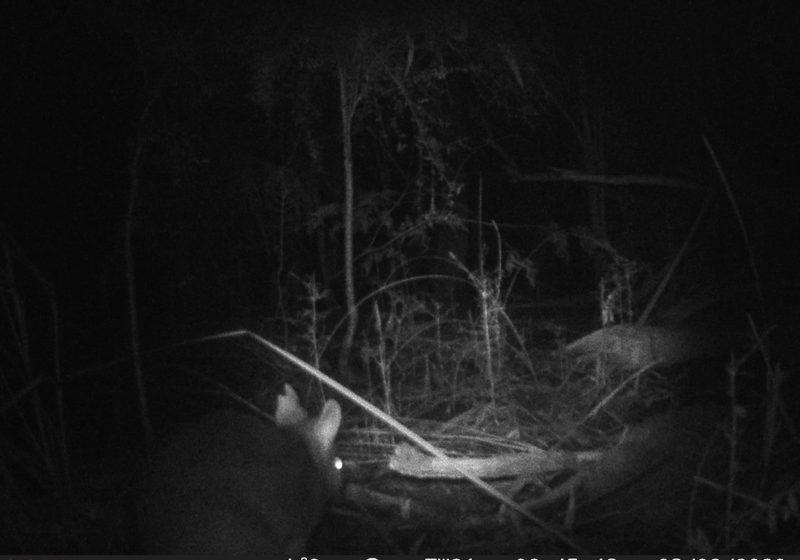 elusive-bandicoot-3