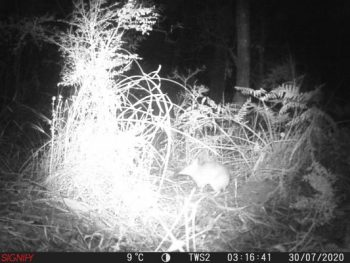Bandicoots_on_camera_2