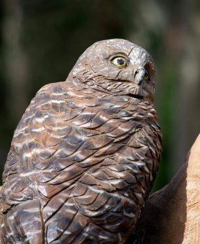 environmental art sculpture_1 owl